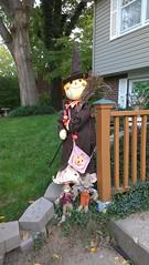 flower(0.0), backyard(1.0), garden(1.0), scarecrow(1.0), yard(1.0), lawn(1.0), spring(1.0),