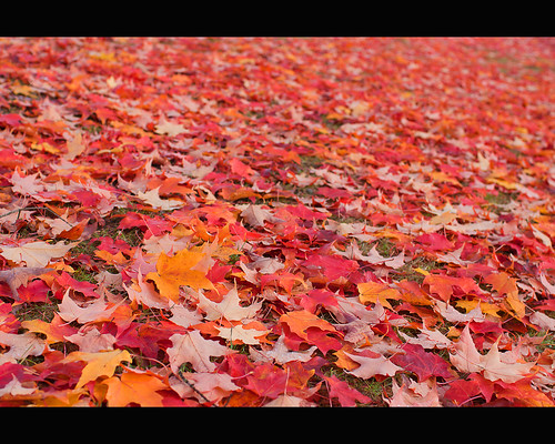Yellows and Reds: an Autumn Carpet
