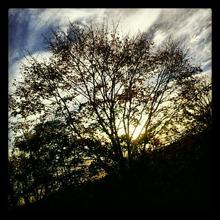 #chilly #morning just hoping to get power back today #Sandy #noelectricity #tree #clouds