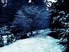 Day 10 - Snow