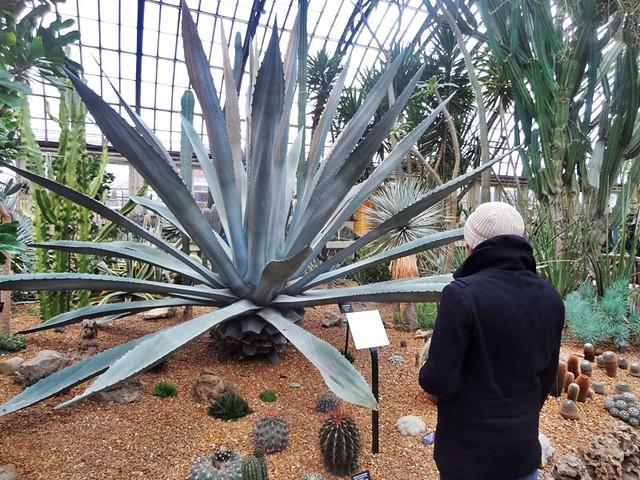 large-plant