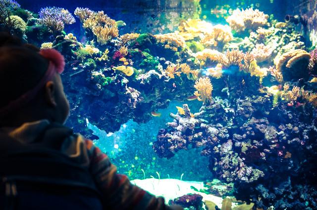 Dallas World Aquarium Flickr Photo Sharing