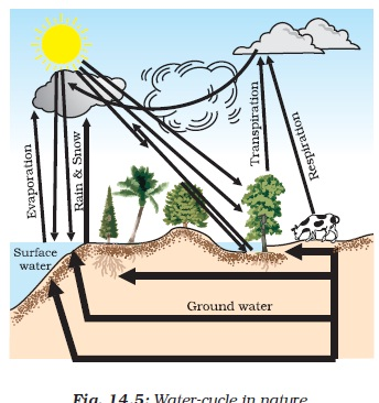 NCERT Class IX Science Chapter 14 Natural Resources