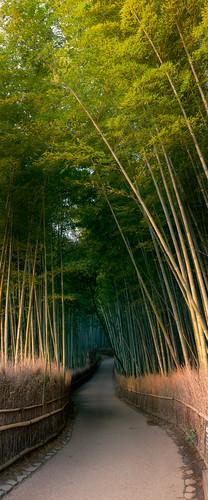 trees vacation copyright japan forest sunrise john photography dawn kyoto path january peaceful bamboo arashiyama tranquil crouch 2013 johncrouch copyrightjohncrouch johncrouchphotography crouchphotos
