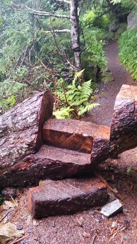 Clever trail log