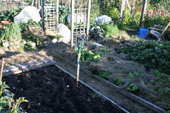 frost protected gardens 003
