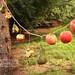 El juego de las manzanas (+8) by Destellos de Vida ♥ Fotografía