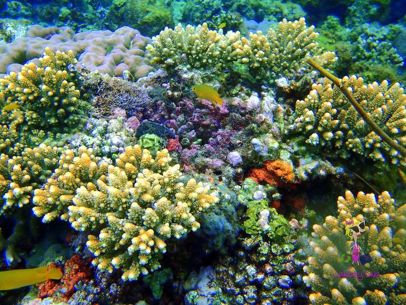 Pretty corals