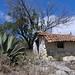 Small shack and Maguey - Maguey pulquera y una chozita; cerca de Las Palmas, Región Mixteca, Oaxaca, Mexico por Lon&Queta