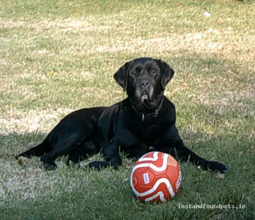 Mon, Oct 15th, 2012 Lost Male Dog - Garryspillane, Kilmallock, Limerick