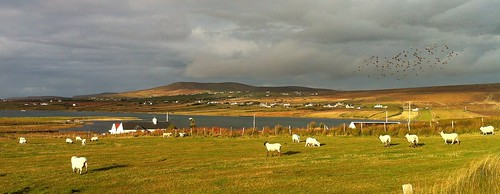 seascape nature landscape photography seaside scenery sheep mayo foxpoint erris belmullet maryhc maryhealycarter