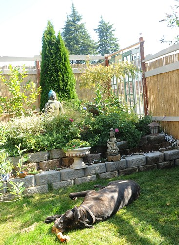 Elliott the mastiff dog, snuggling up to a large bone, Garden for the Buddha, bamboo fence, recycled wood & window, Seattle, Washington, USA by Wonderlane