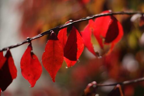 Shining Red
