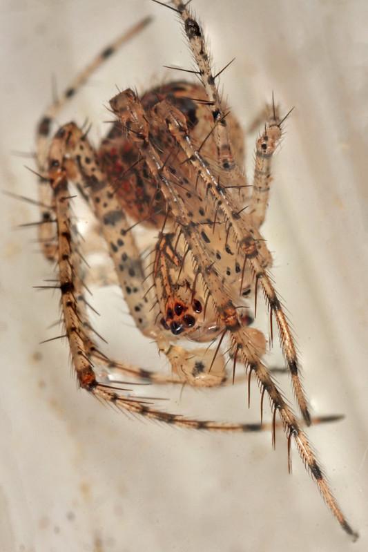20121020_094835_spider