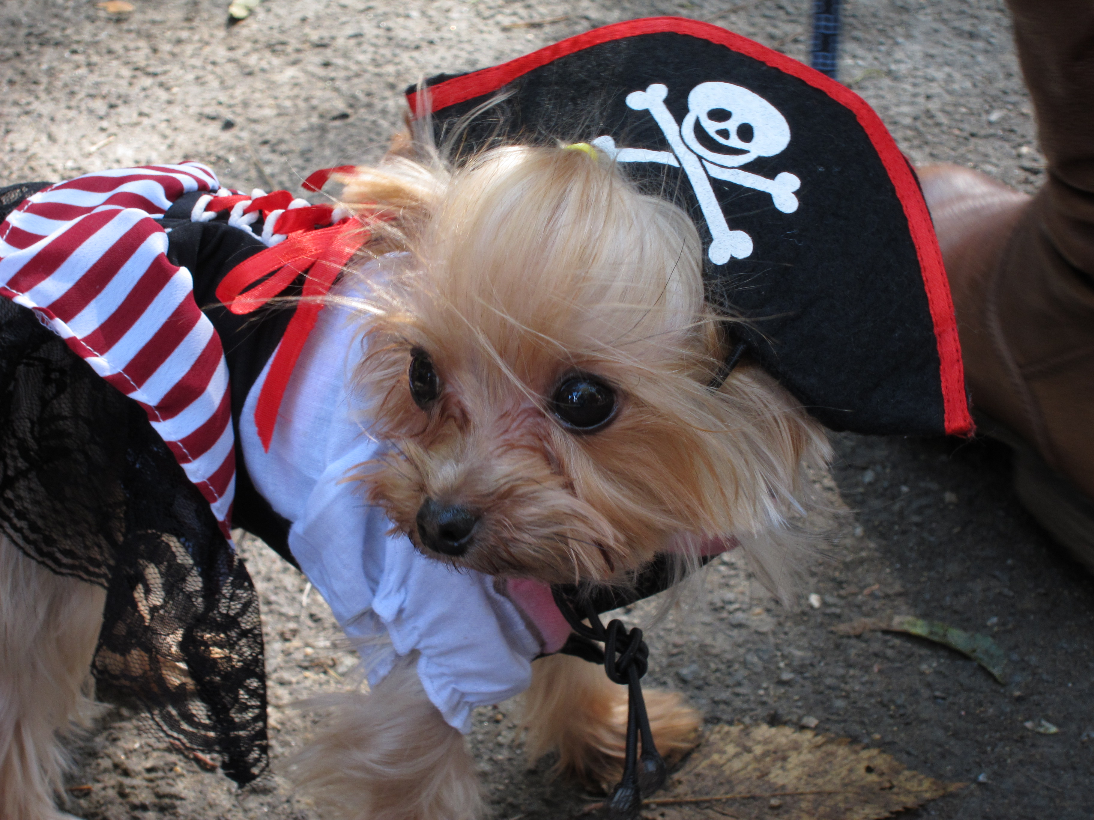 Dog Pirate Costume With Eye Patch