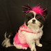 cute dog in pink costume