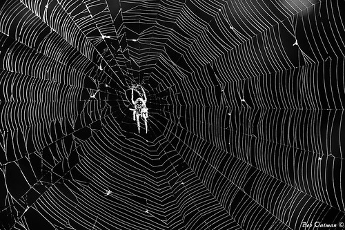 blackandwhite spider web spiderweb fortworthnaturecenter