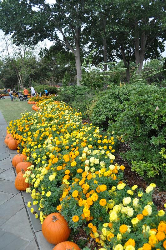 Dallas Arboretum 10-13-12 (309)