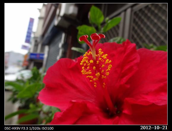 20121021_Flower2