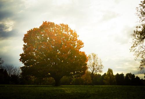 morning autumn orange tree fall photoshop nikon tn tennessee andrewjackson hermitage vignette lightroom oldhickory thehermitage d90