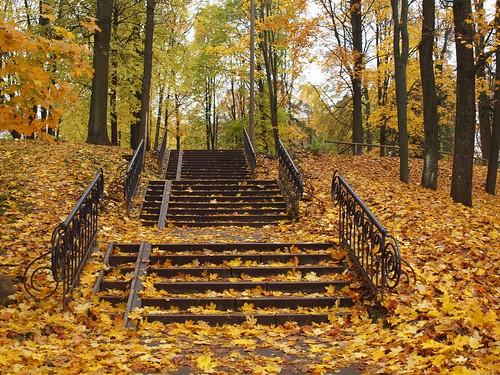 park autumn tree fall leaves yellow fog maple europe stair estonia linden baltic puu 4autumn baltics tartu trepp estland viro sügis estonie karlova lehed эстония vaher dorpat yuryev tarbatu pärn vanagram εσθονία yuryew