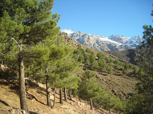 Walking down to Imlil through the pines