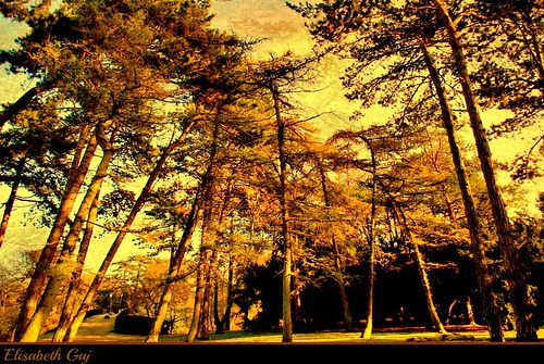 park autumn trees nature skåne europa sweden natur sverige scandinavia malmö szwecja elisabethgaj diamondclassphotographer flickrdiamond 100commentgroup bestcapturesaoi bestevergoldenartists texstured