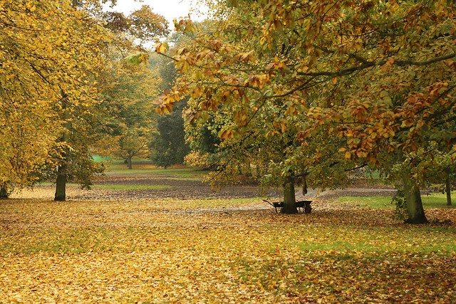Greenwich Park and autumn leaves
