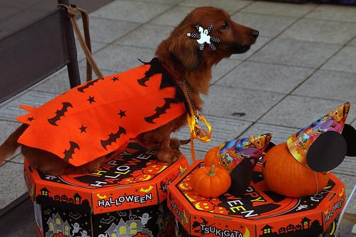 Halloween-World-in-WARABI-01