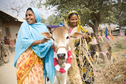 Heifer International Bangladesh Women