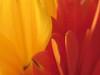 gialloarancio