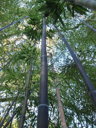 Hakone Japanese Gardens, Saratoga, CA IMG_2338