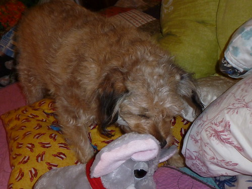 Winnie & her Christmas Elephant