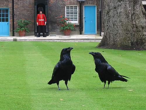 640px-London_tower_ravens