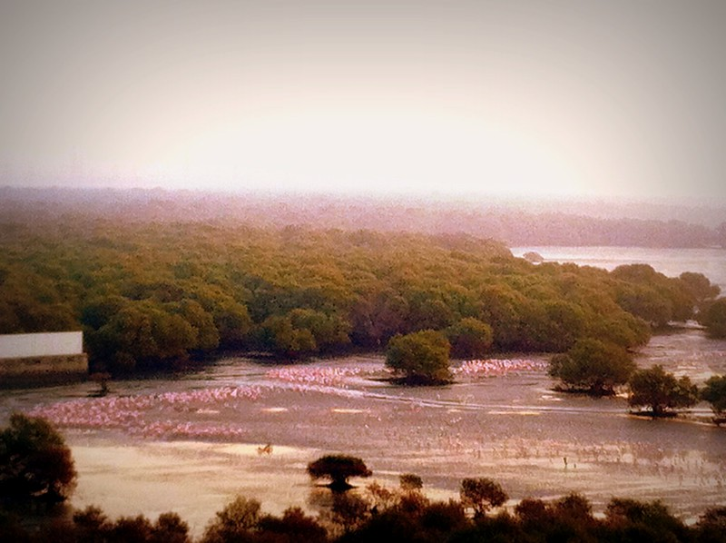 Flamingos on the mudflats