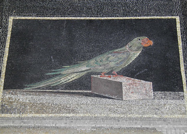 Hellenistic mosaic floor panel of an Alexandrine parakeet from Pergamon, 2nd century BC, Pergamon Museum