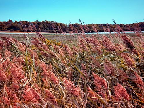 autumn iamcanadian