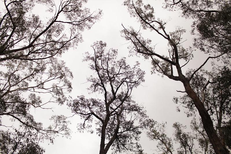 Tree-change