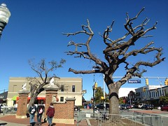 The Oaks at Toomer's Corner
