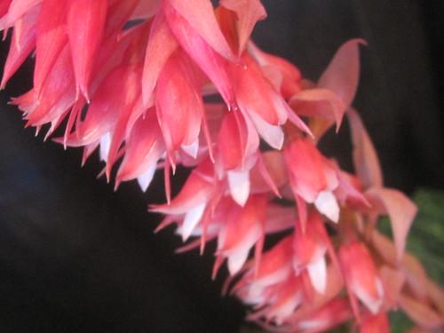 Orchid Details