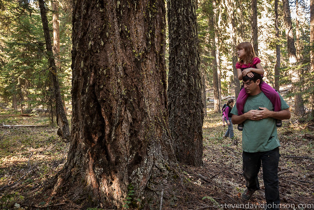 Proposed logging area near Cascade-Siskiyou National Monument