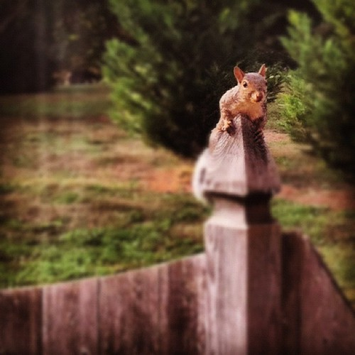 A person with ADD would have been totally distracted by this little guy. Taking pictures and everything. Phew...glad that's not me. #squirrel
