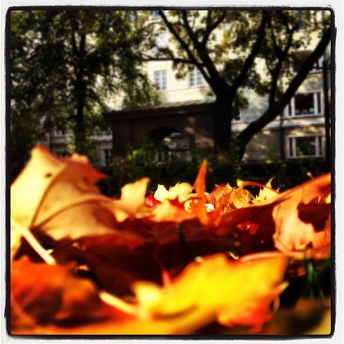 Fotosöndag - Orange av Magnus Attefall