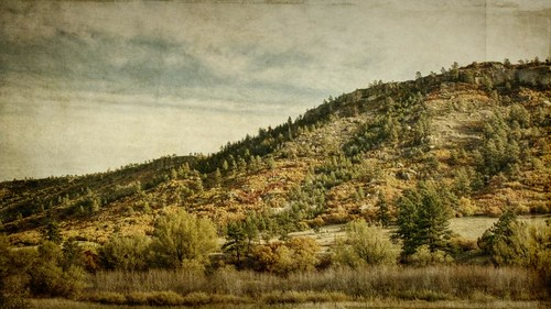 morning autumn trees sky fall yellow canon landscape gold colorado pines aged oaks hdr textured larkspur 16x9 t1i