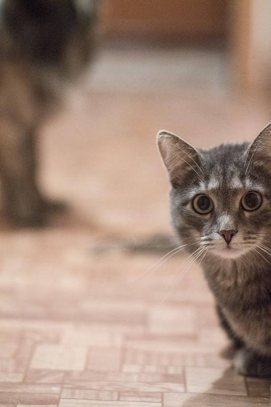 Suddenly, a Bokeh Cat Appears
