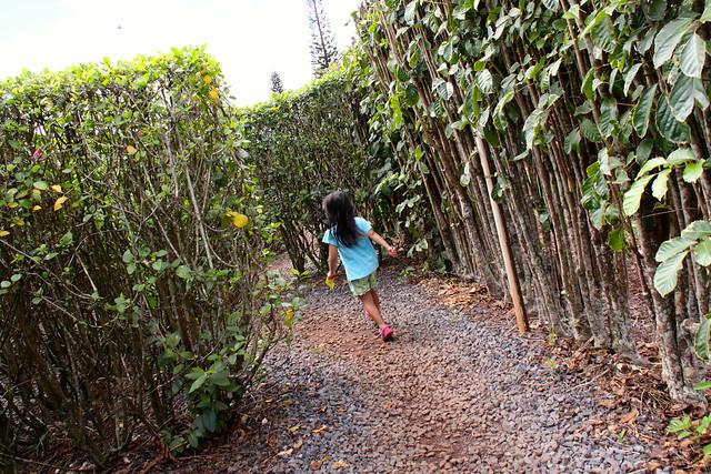 Dole Pineapple Garden Maze