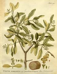 flower(0.0), produce(0.0), food(0.0), shrub(1.0), branch(1.0), leaf(1.0), plant(1.0), olive(1.0), herb(1.0), flora(1.0), fruit(1.0), twig(1.0),