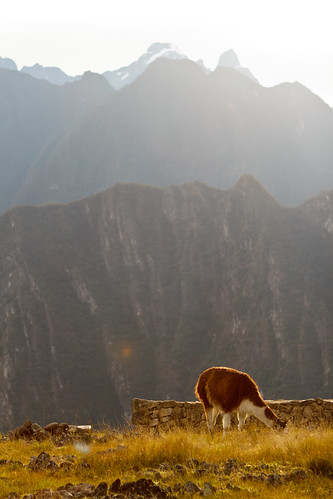 mountains peru southamerica grass sunrise llama places andes machupicchu pe locations ef2470f28lusm cuzcoregion cuscoregion