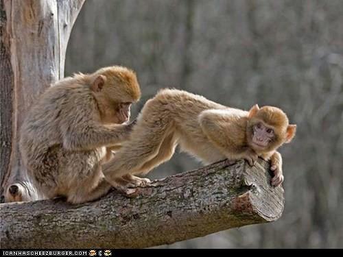 monkey proctologist by Jeff's people and stuff