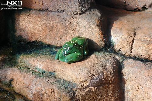 WILD LIFE Sydney Zoo frog